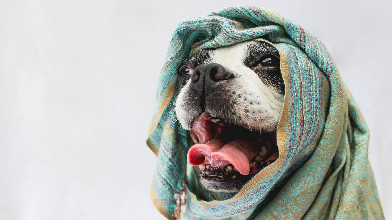 Bufandas para perros - 1366x768