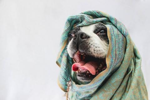 Bufandas para perros - 480x320