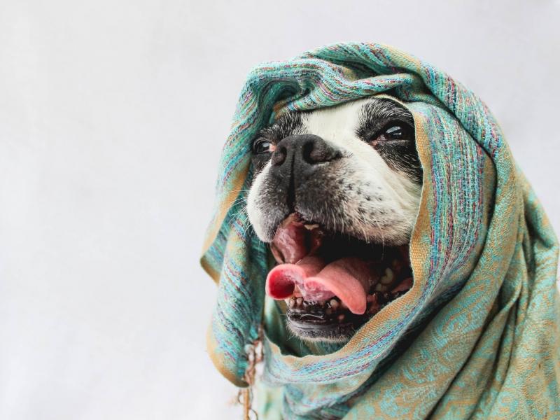 Bufandas para perros - 800x600