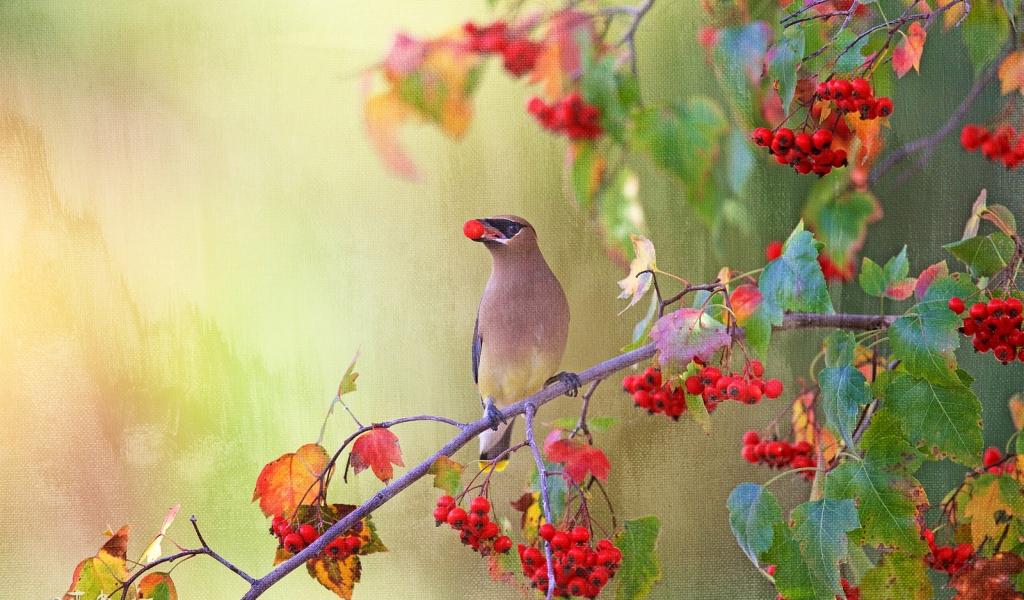 Dibujo pintado de aves - 1024x600