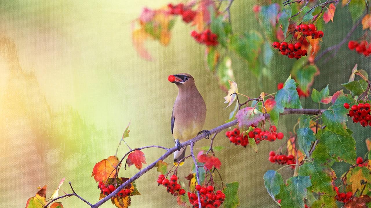 Dibujo pintado de aves - 1280x720