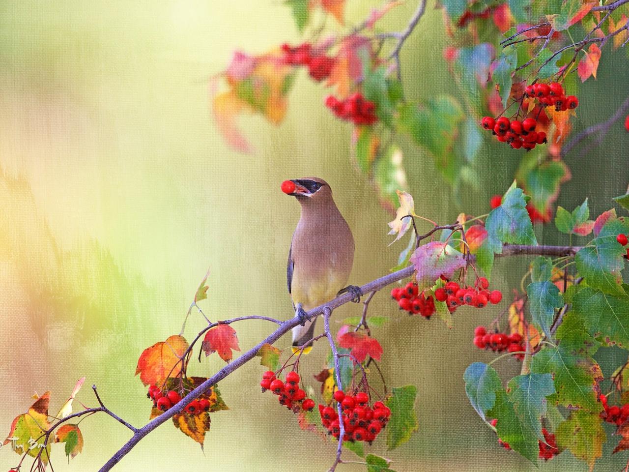Dibujo pintado de aves - 1280x960