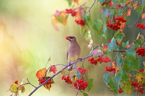 Dibujo pintado de aves - 480x320