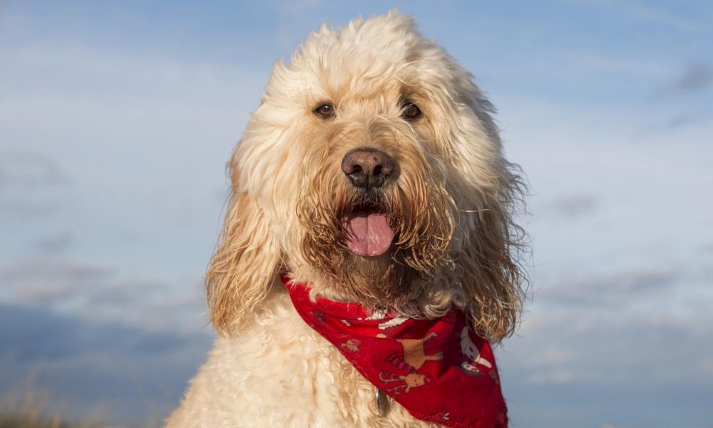 Fotografías de perros - 1000x600