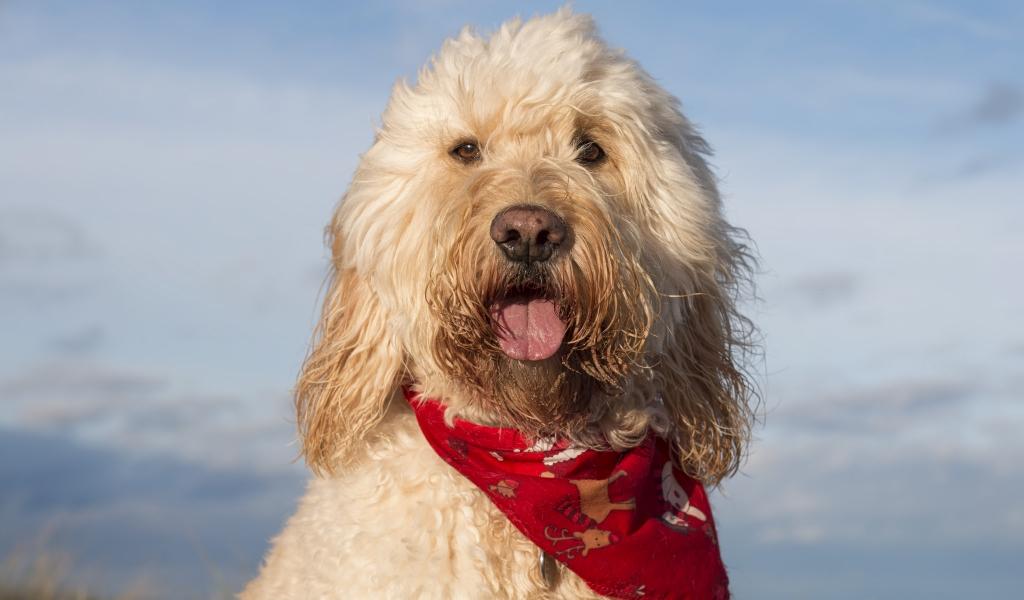 Fotografías de perros - 1024x600