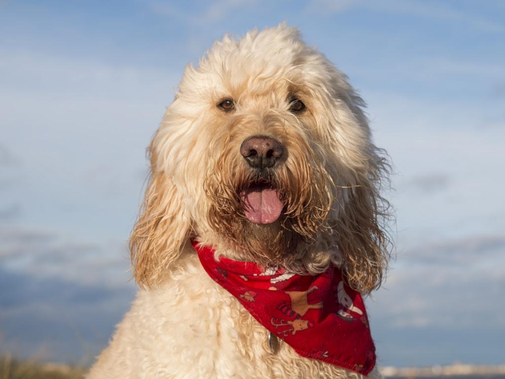 Fotografías de perros - 1024x768
