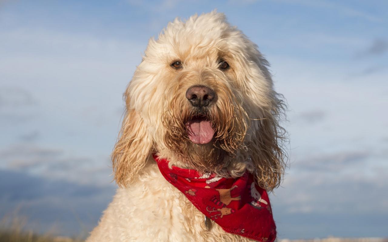 Fotografías de perros - 1280x800