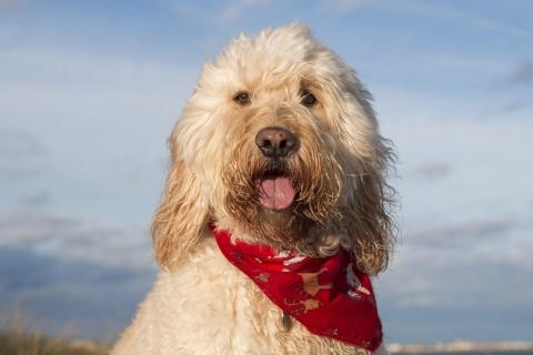 Fotografías de perros - 480x320