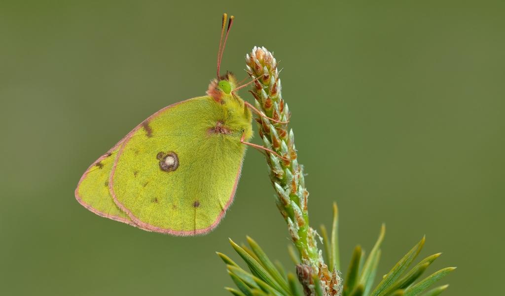 Fotografías macro de mariposas - 1024x600
