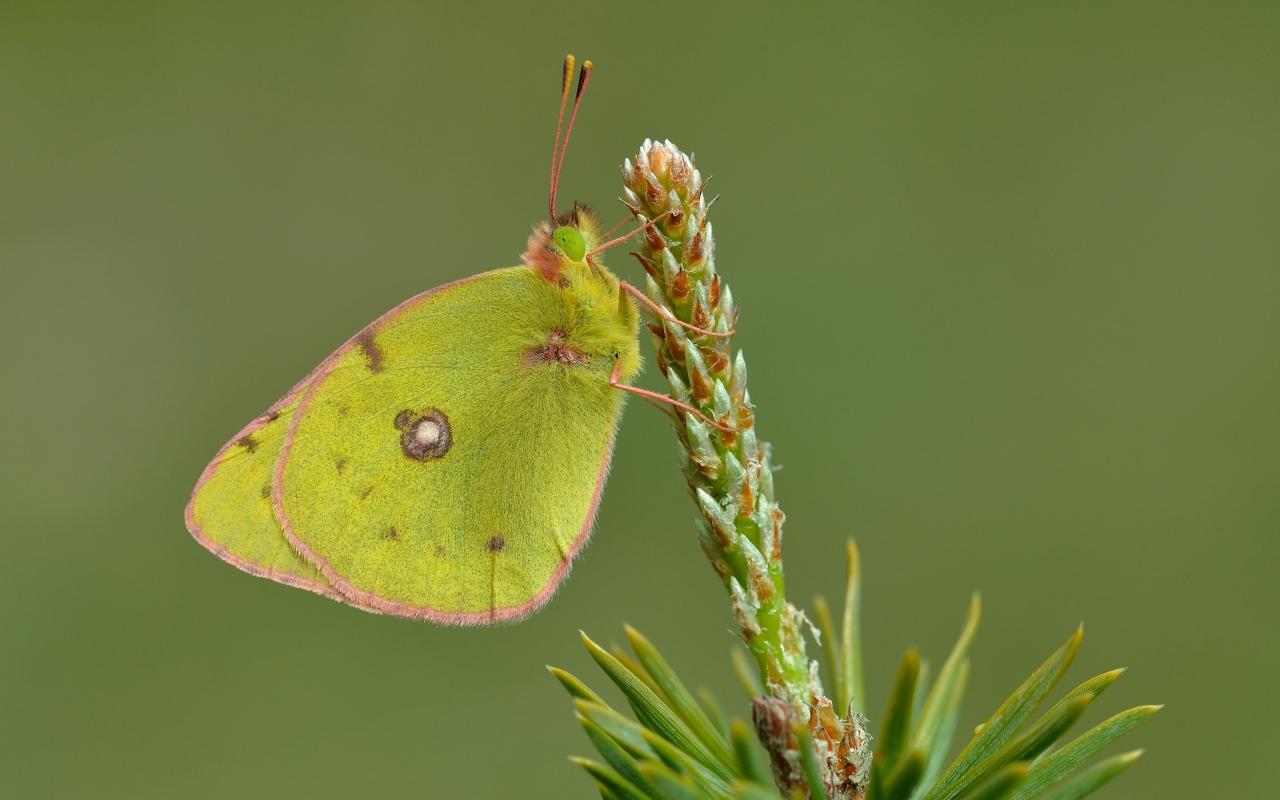 Fotografías macro de mariposas - 1280x800