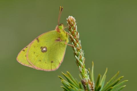 Fotografías macro de mariposas - 480x320