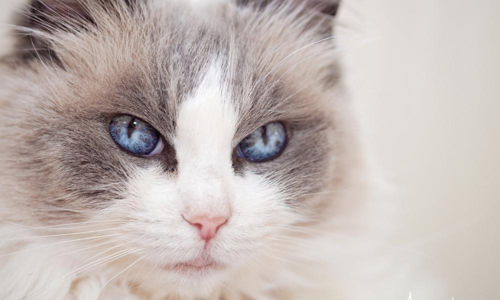 Gatos hermosos - 1000x600
