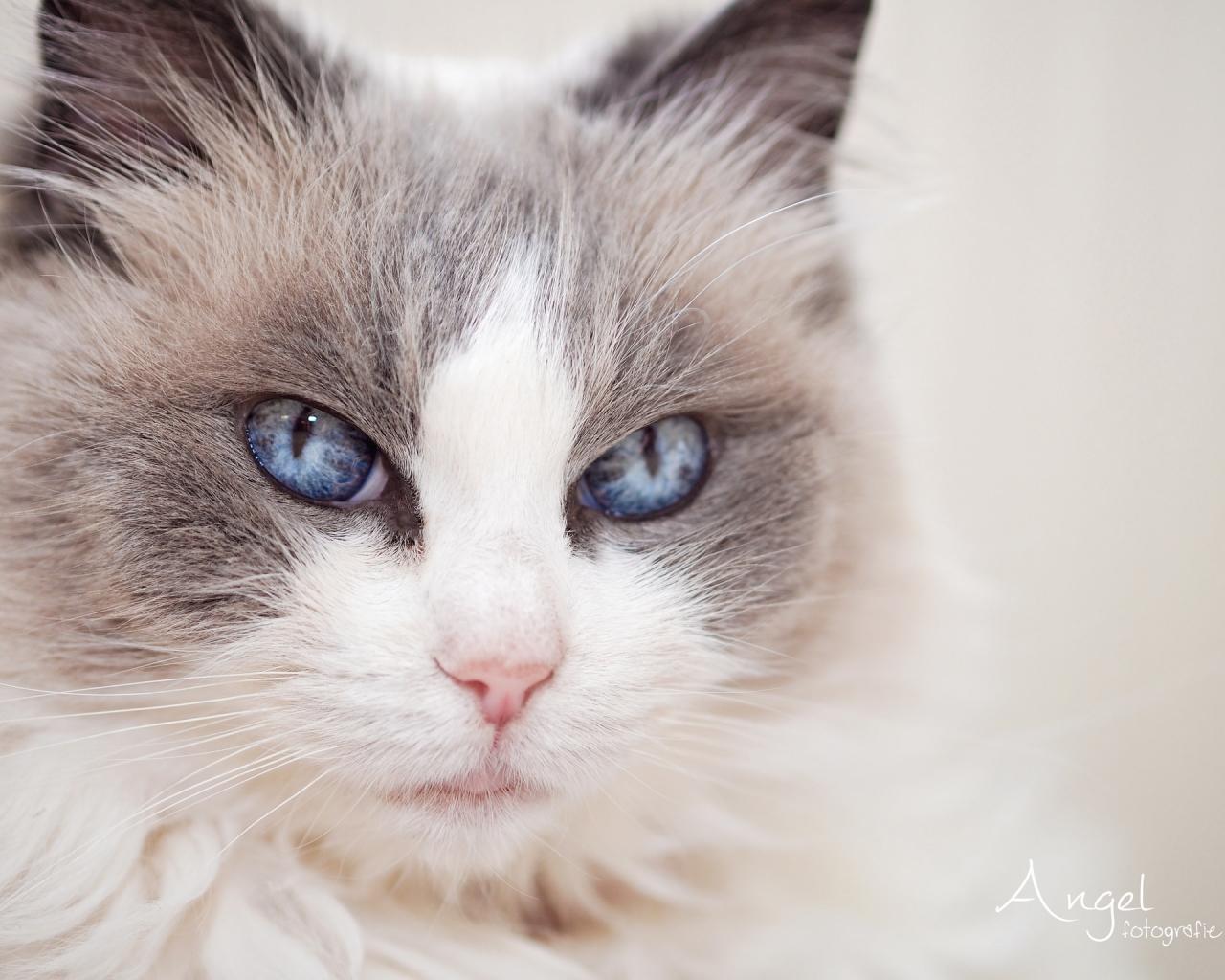 Gatos hermosos - 1280x1024
