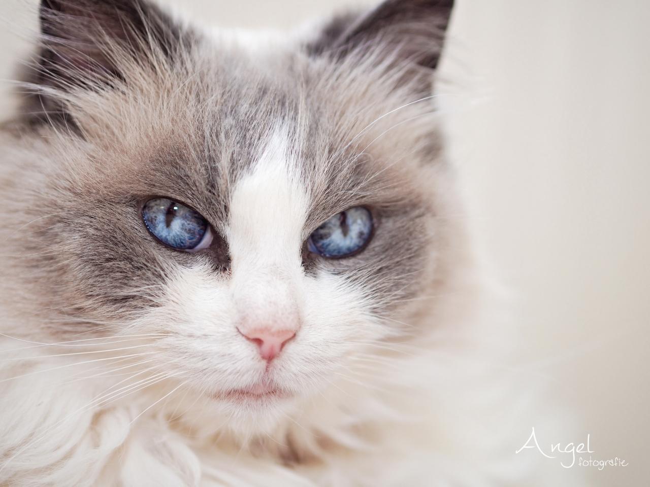 Gatos hermosos - 1280x960