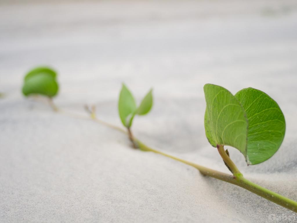 Hojas de plantas en la arena - 1024x768