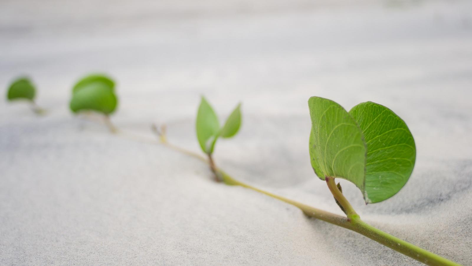 Hojas de plantas en la arena - 1600x900