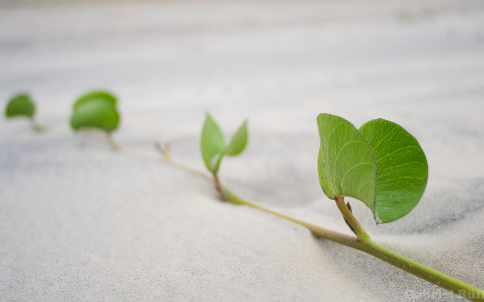 Hojas de plantas en la arena - 1680x1050