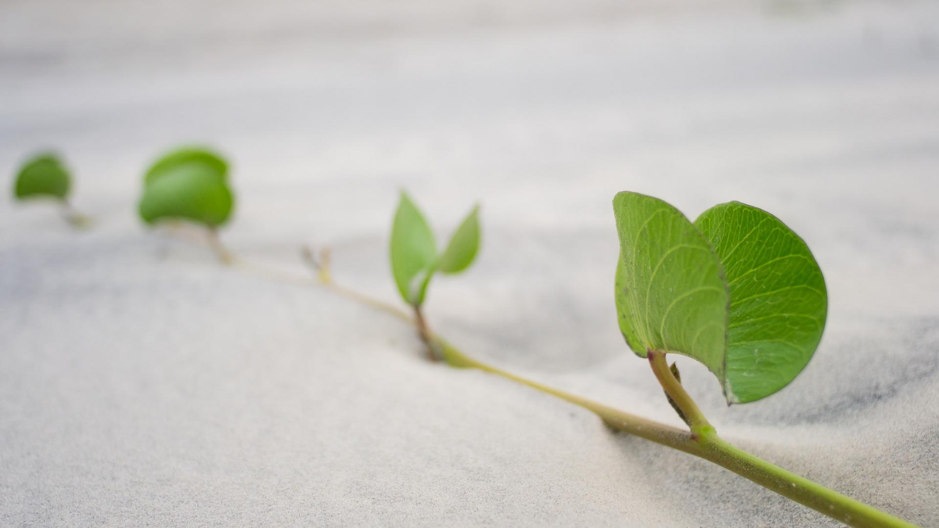 Hojas de plantas en la arena - 1920x1080