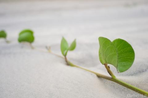 Hojas de plantas en la arena - 480x320