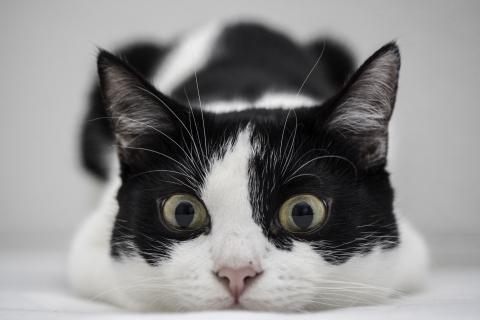 Un gato blanco y negro - 480x320