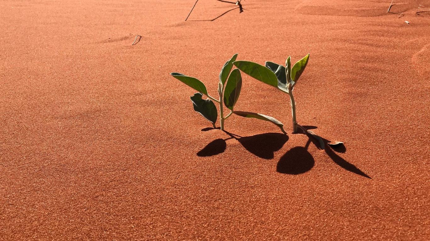 Arenas y plantas - 1366x768