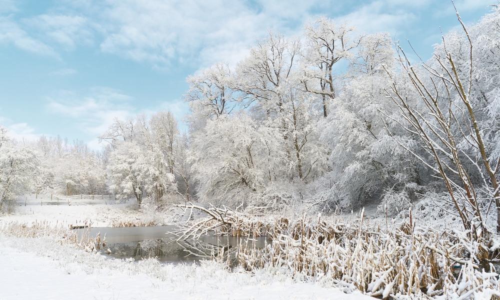 Invierno lleno de Nieve - 1000x600
