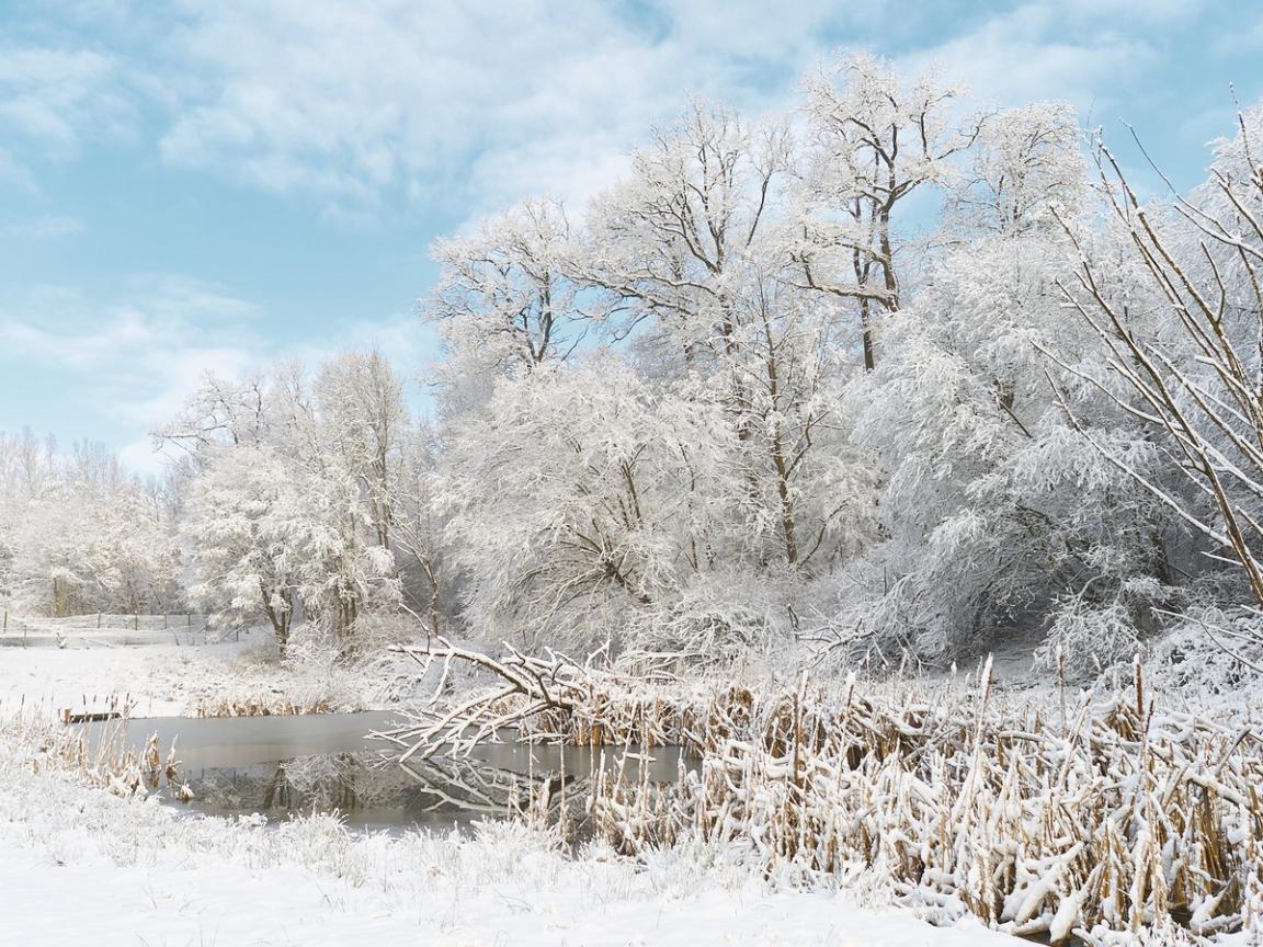Invierno lleno de Nieve - 1152x864