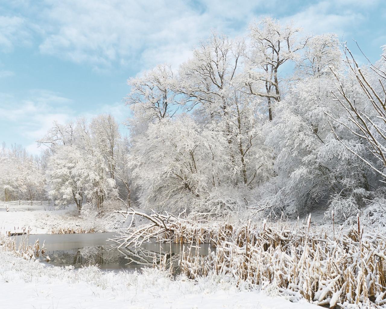 Invierno lleno de Nieve - 1280x1024