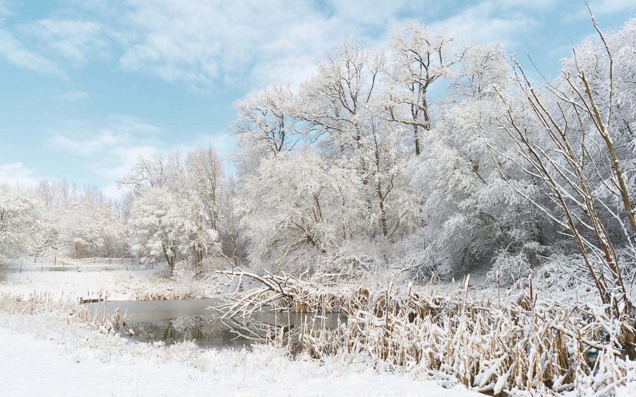 Invierno lleno de Nieve - 1280x800