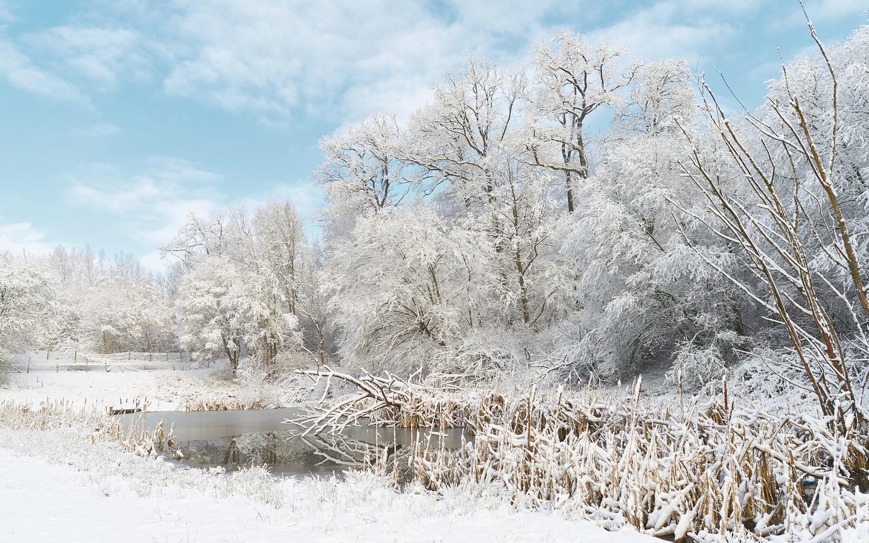 Invierno lleno de Nieve - 1440x900