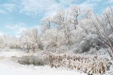 Invierno lleno de Nieve - 480x320