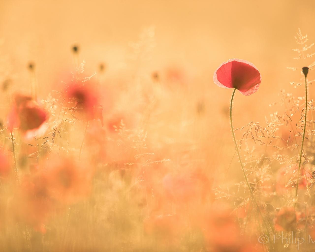 Paisaje con flores - 1280x1024