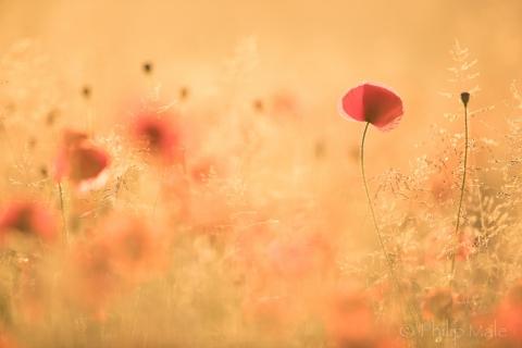 Paisaje con flores - 480x320
