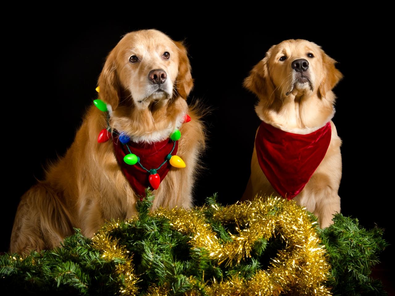 Perros con adornos Navidad - 1280x960
