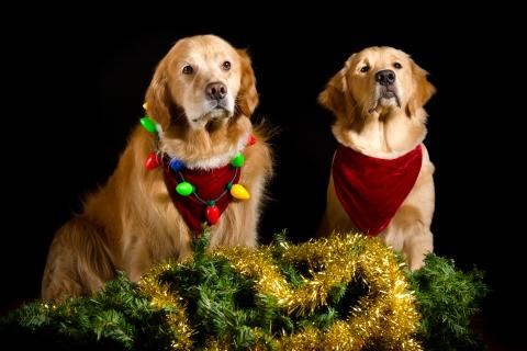 Perros con adornos Navidad - 480x320