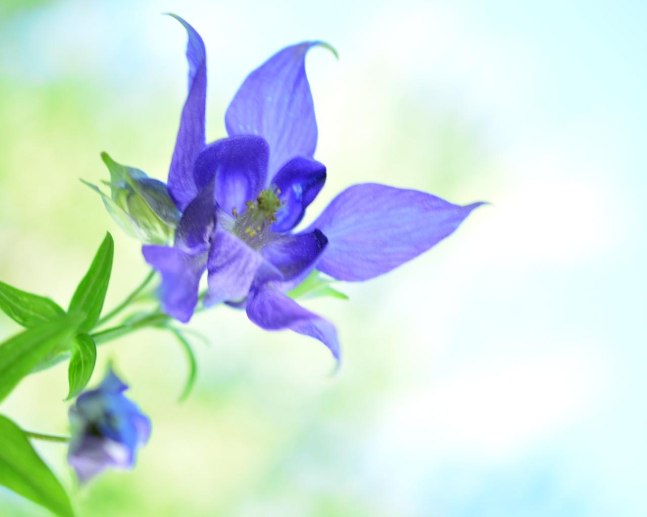 Bella flor azul - 1280x1024