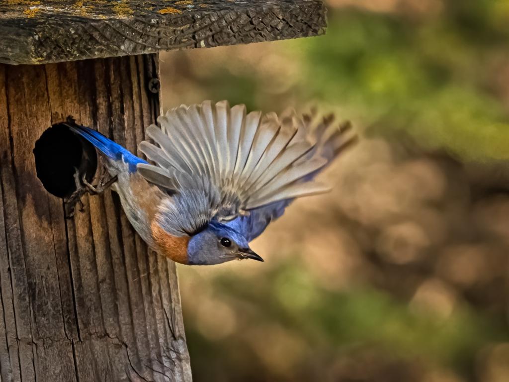 Pajaro saliendo de su nido - 1024x768