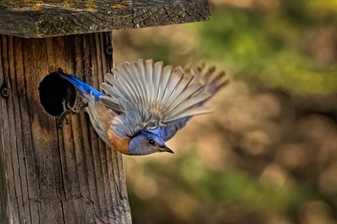 Pajaro saliendo de su nido - 480x320