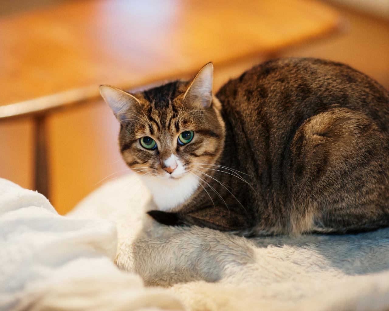 Un gato mirandote - 1280x1024