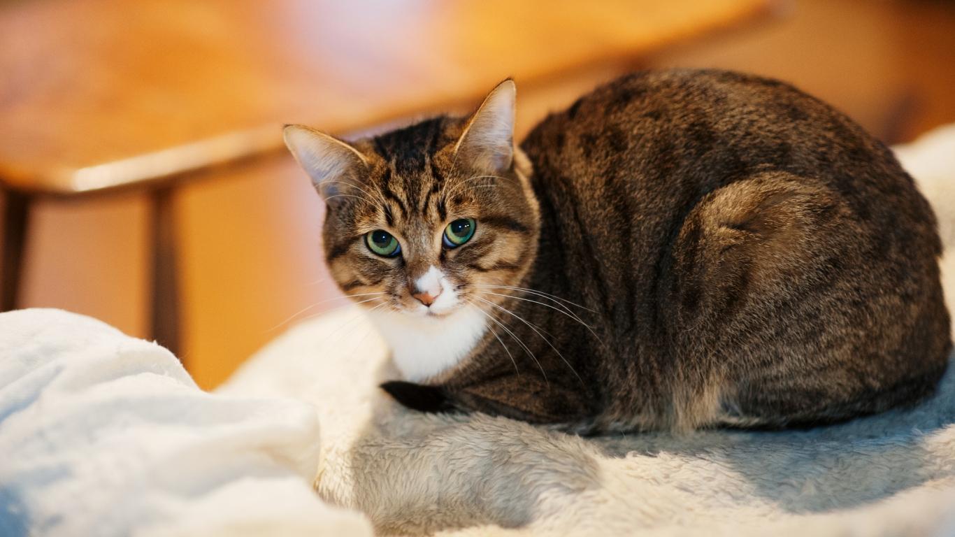 Un gato mirandote - 1366x768