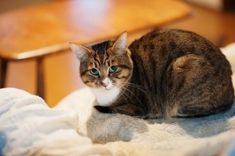 Un gato mirandote - 480x320