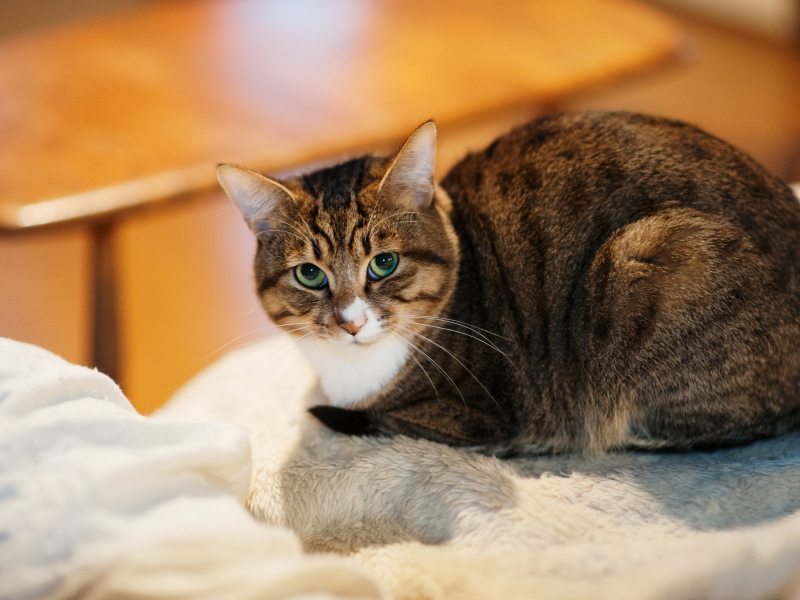 Un gato mirandote - 800x600