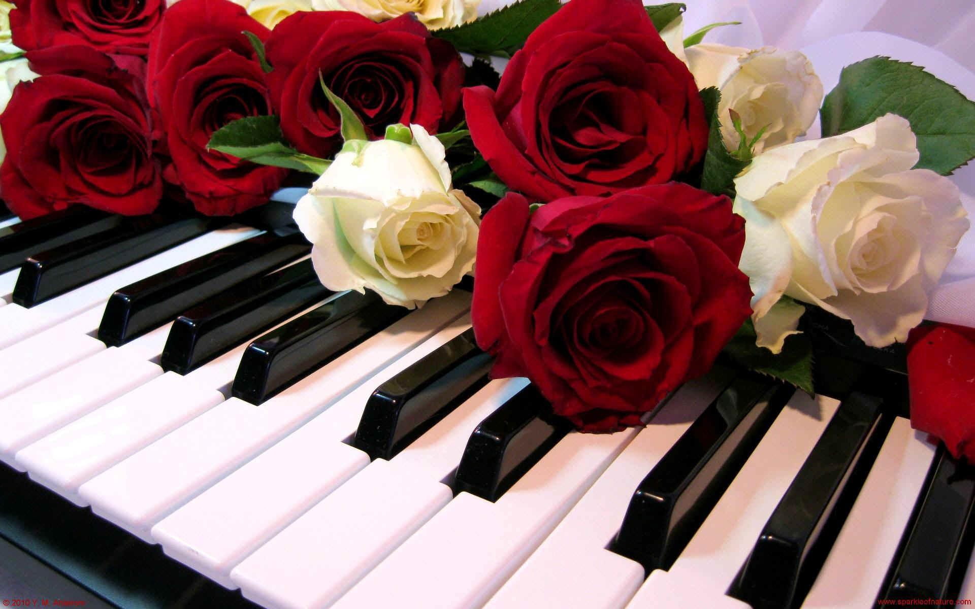 Rosas y un piano - 1920x1200