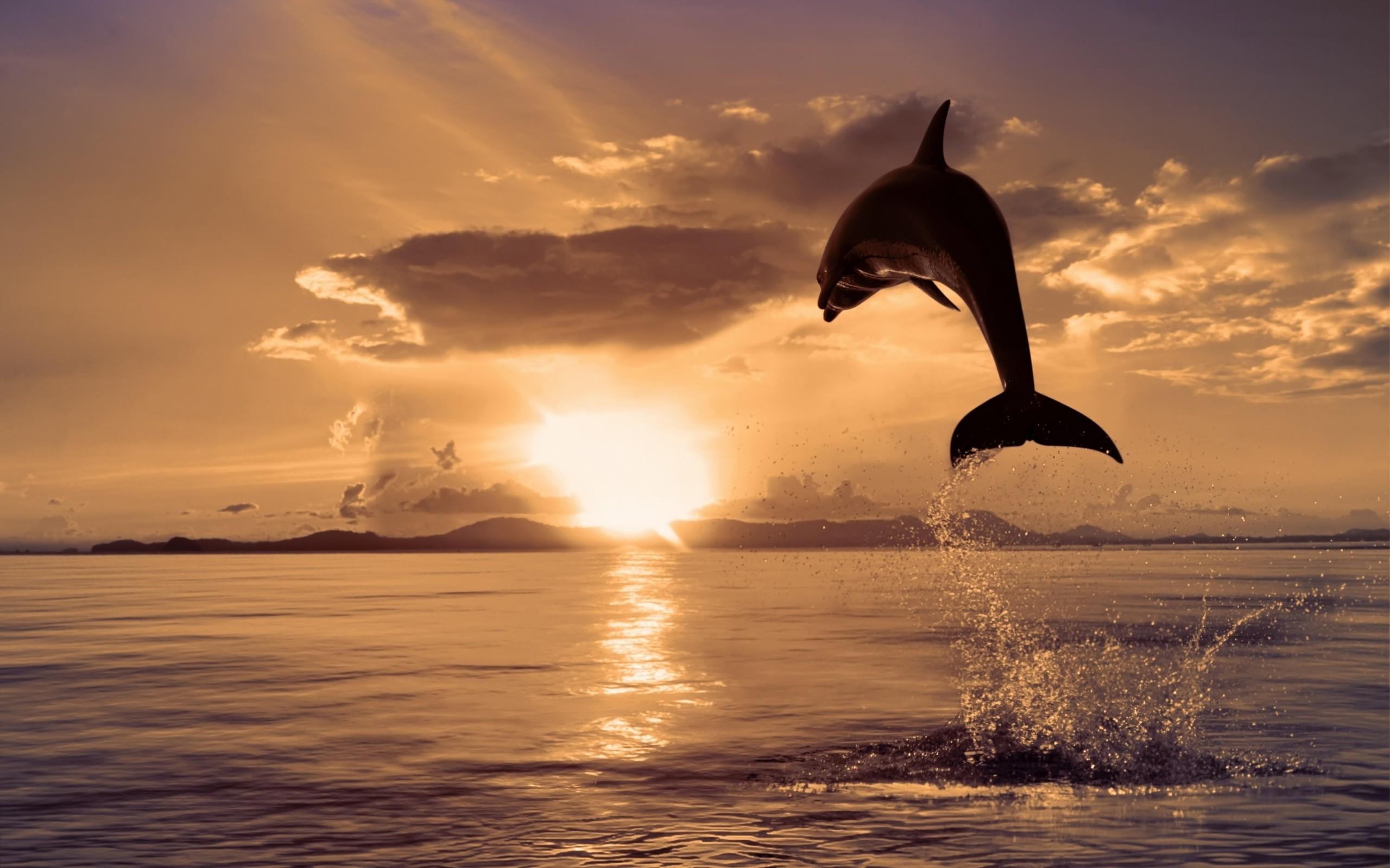 Salto de delfin - 2560x1600
