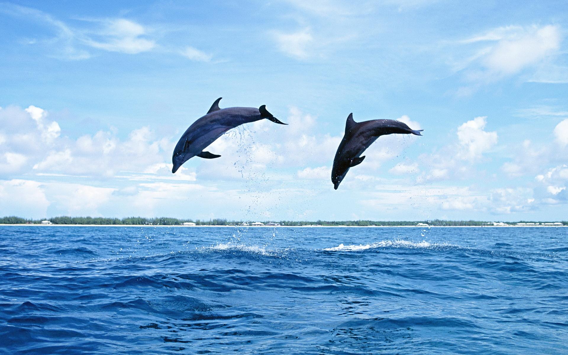 Salto de delfines - 1920x1200