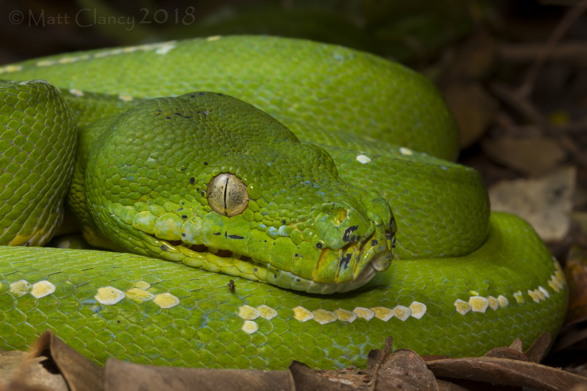 Serpiente de color verde - 2048x1365