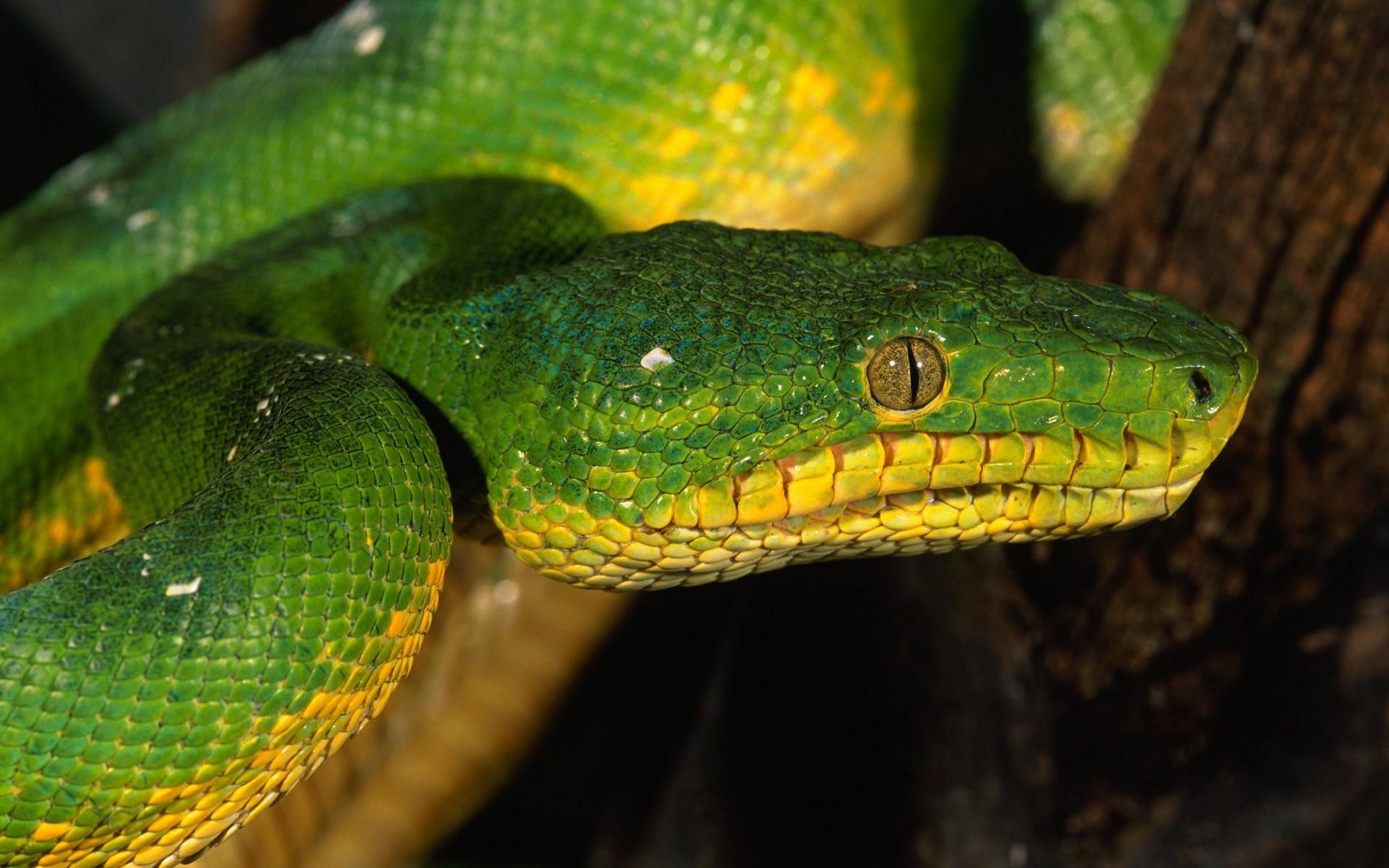 Serpiente verde - 1920x1200