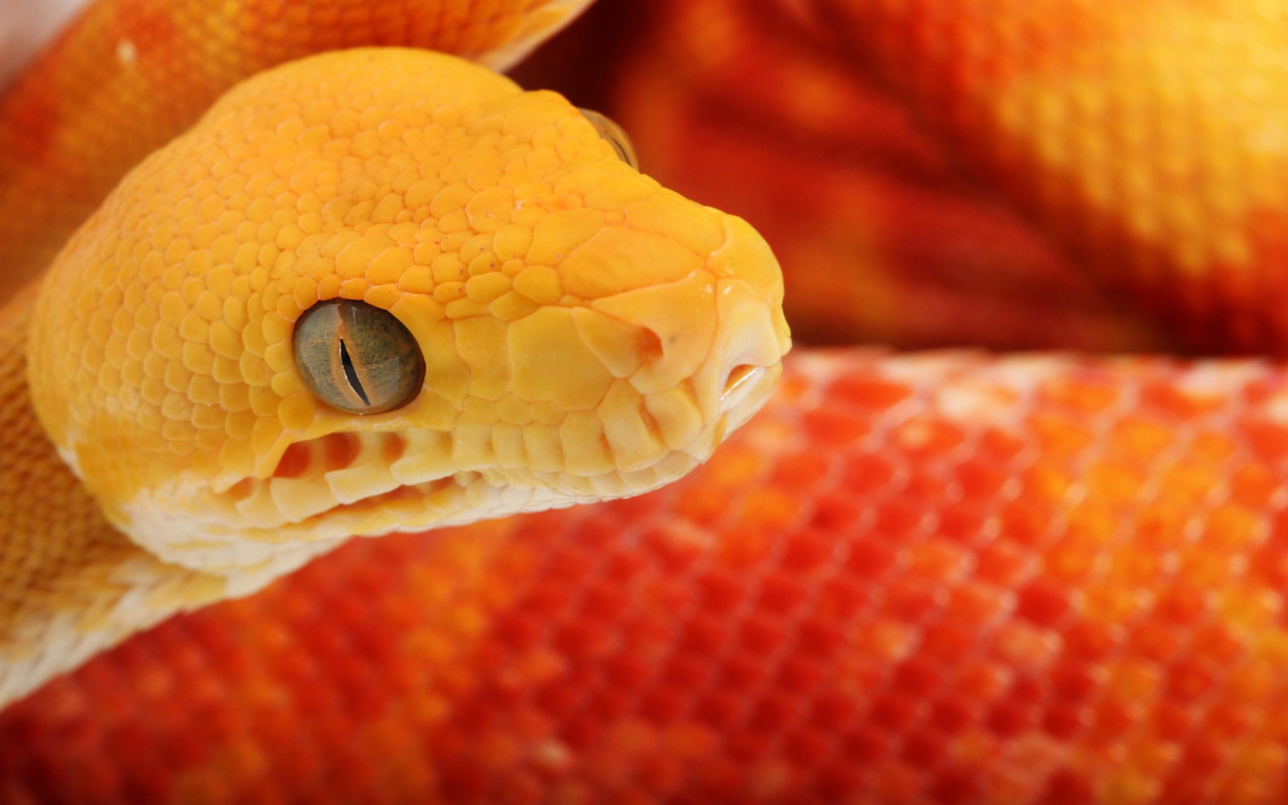 Serpientes de color - 2560x1600