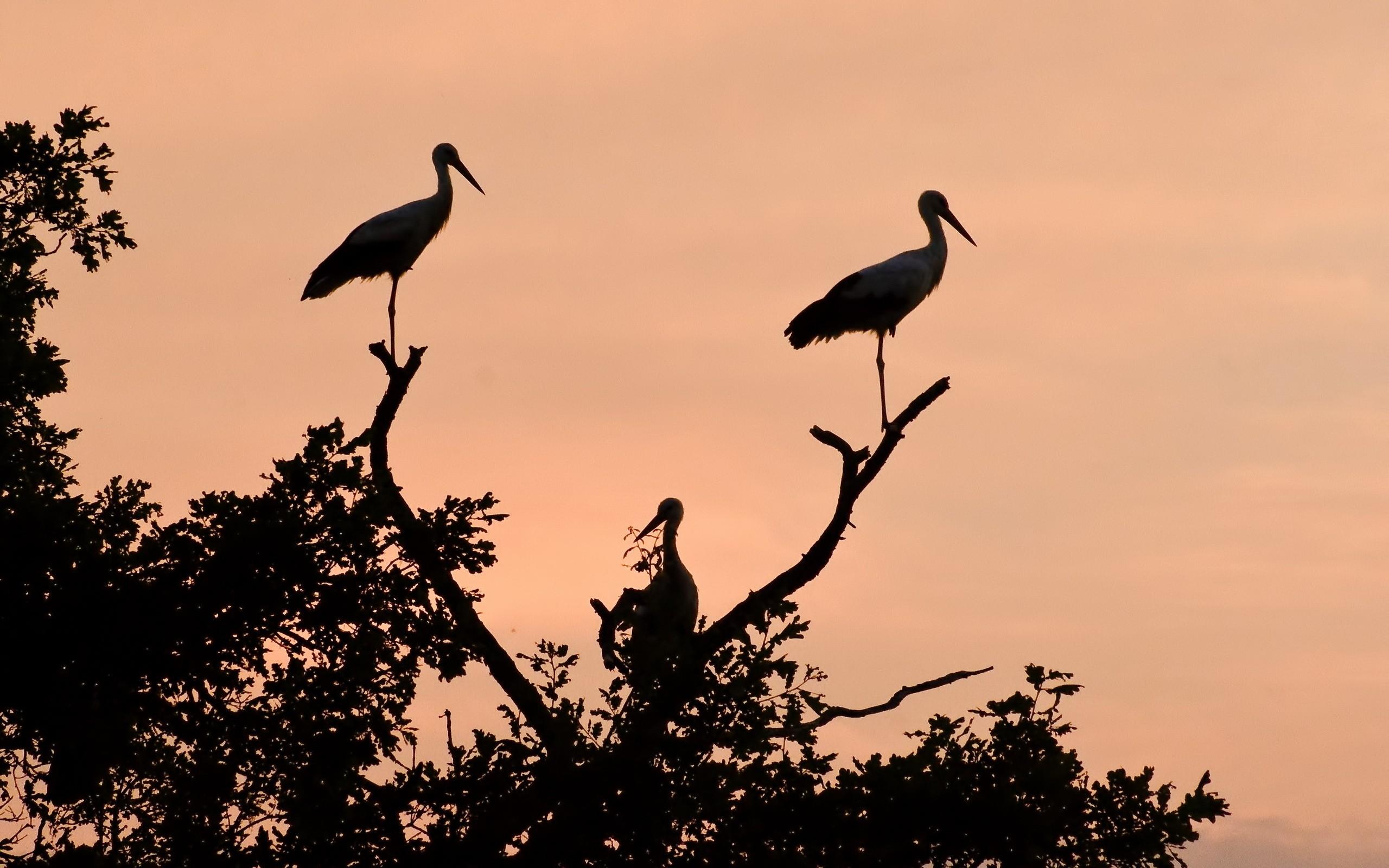 Siluetas de aves - 2560x1600