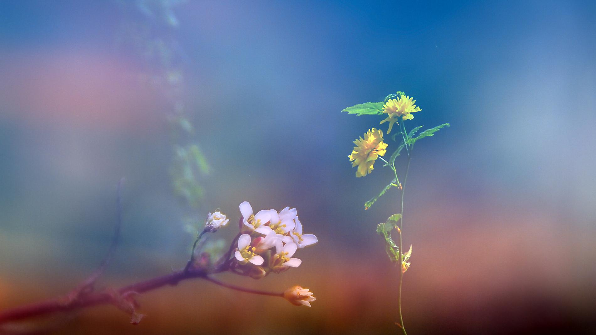 Tallo con flor amarilla - 1900x1069